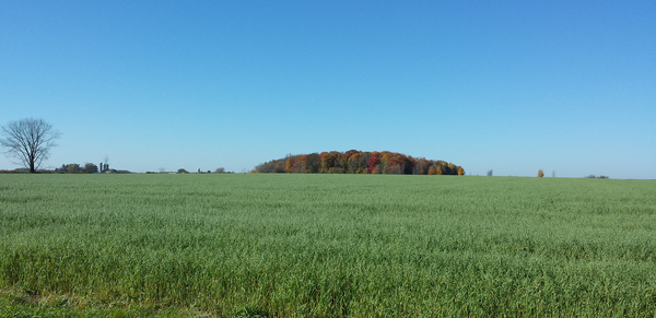 Wheat field and fall forest